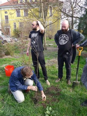 Sadzenie craftowego drzewka